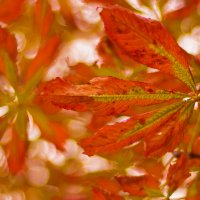 Autumn :: Наталья Сапанюк