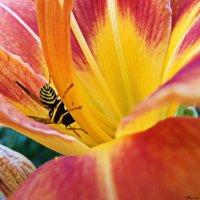 Оса на цветке :: Мария Ковалёва