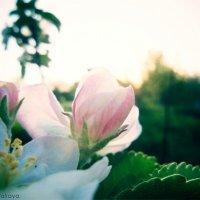 Цветок :: Мария Ковалёва