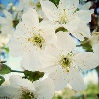 Весна :: Мария Ковалёва