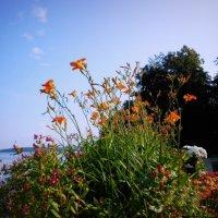 Природа около озера Увильды :: Елена Кашлач