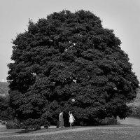 Когда деревья были большими :: Сергей Миннигалин