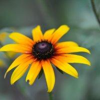 Цветок :: Борис Устюжанин
