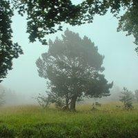 Там за туманами... :: Svetlana Sneg