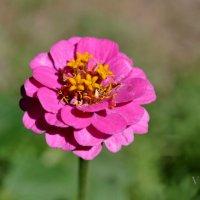 цветок :: Ирена Воргуль