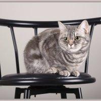 Алиса на стуле :: Jossif Braschinsky