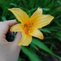flower :: ruth kan