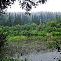 Заглянула к кикиморе в гости...или Окутан лес туманной дымкой 2 :: Нина северянка