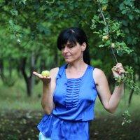 яблочный ветер. :: Дарья Коротышева