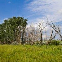Жизнь деревьев :: Андрей Зарубин