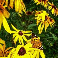 Солнечные цветы :: Ирина Приходько