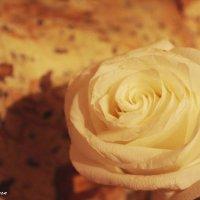 Роза ветров :: А. Stern