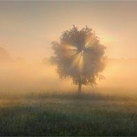 Самое Доброе Утро! :: Александр Киценко