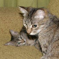 Мама с дочкой :: Светлана Боброва