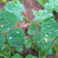 После дождя :: Кристина Волошина