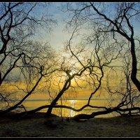 На закате... :: Jossif Braschinsky