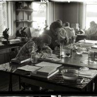 работа кипит :: Надежда Карасева