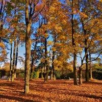 Листопад в Александровском Парке... :: Sergey Gordoff