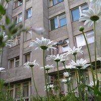 Сад гуливера :: Alexander Varykhanov