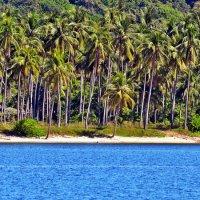 пальмы... море... пляж... :: Дмитрий Боргер