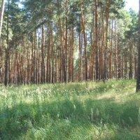 Лесные травы :: Галина