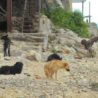 Браконьерские собачки :: M Marikfoto