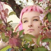 Pink :: Sandra Snow