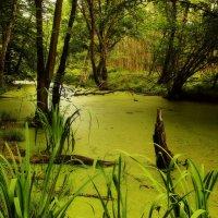 То ли ручей, то ли болото ... :: Alexander Andronik