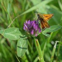 Бабочка :: Алина