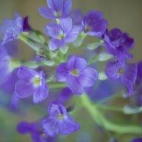 Flower :: Яна Васильева