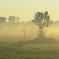 утренний туман :: Дмитрий Брошко