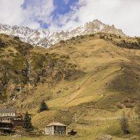 У подножия Кавказских гор :: Герасим Харин