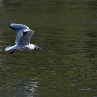 Полёт над заливом :: Анатолий Иргл