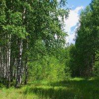 Первый лета кончается месяц... :: Лесо-Вед (Баранов)