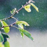 Дождит :: Николай Масляев