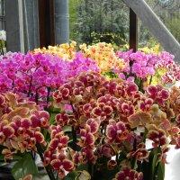 в павильоне орхидей :: Александр Корчемный
