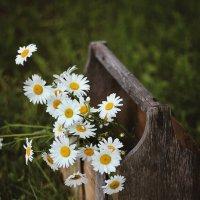 Ромашковое лето :: Liliya