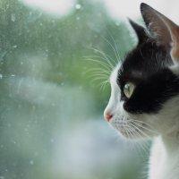 кошачьи раздумья :: Валентина M