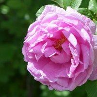Каждый цветок неповторим! :: Татьяна Помогалова
