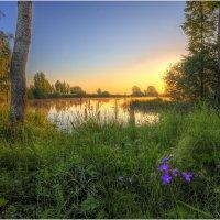 Утро на лесном озере :: Nikita Volkov