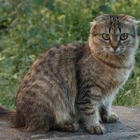 уличный котик :: Елена Логачева