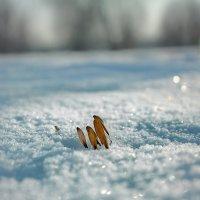 ..зима :: Георгий Никонов