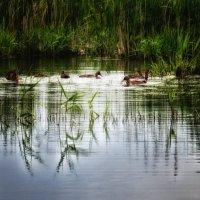 вечерний свет, а природе на погоду наплевать... :: Александр Беляков