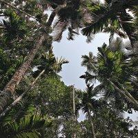 Индийские джунгли!!! :: Вадим Якушев