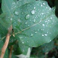 ...дождик... :: марина ковшова