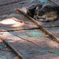 Кошка на крыше :: Елена Даньшина