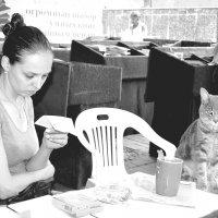 Чай с котиком :: Игорь Попов