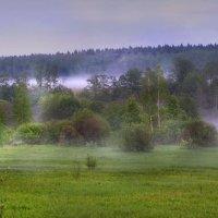 Туман в низине леса :: Лара Симонова