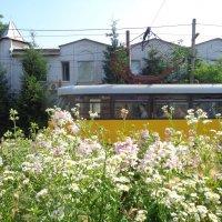 Цветочный маршрут трамвая :: Алекс Аро Аро