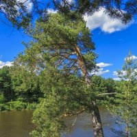 Идущее в реку :: Сергей Цветков